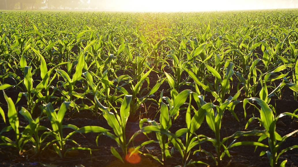 Campos Agricultura